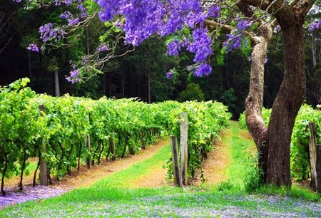 Bago Vineyards - Carnarvon Accommodation