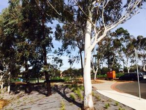 Box Hill Studios at Canterbury Gardens - Carnarvon Accommodation