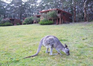 Jenolan Caves Cottages - Carnarvon Accommodation