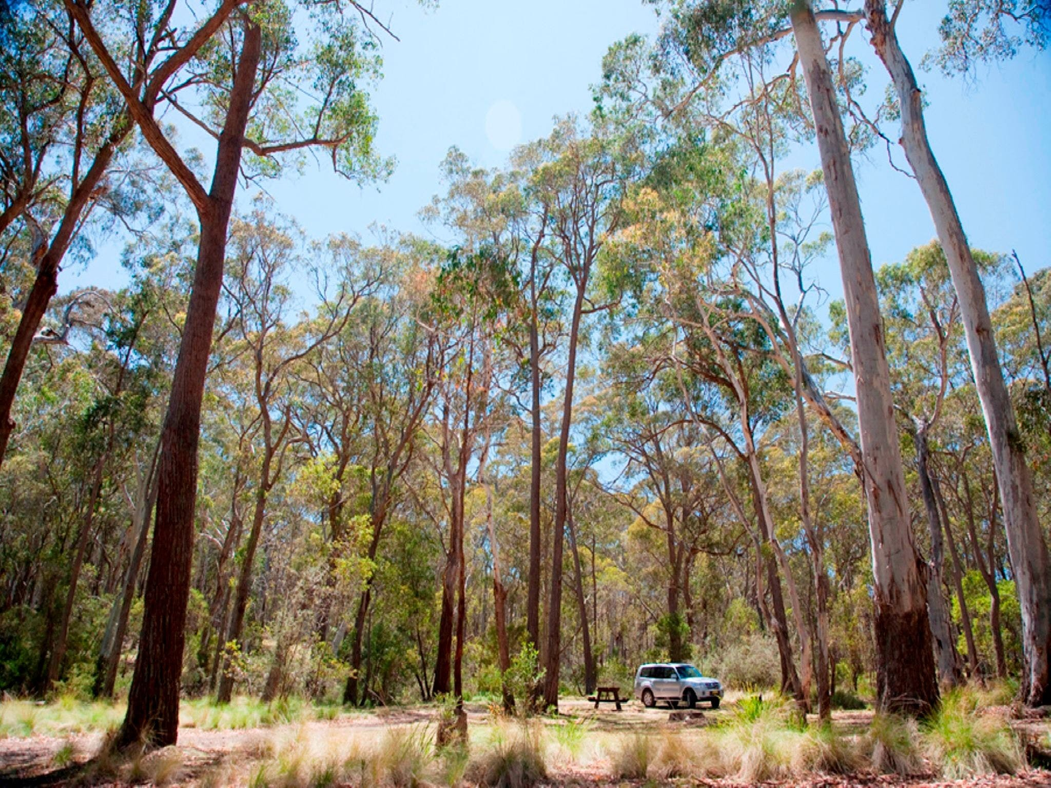 Coolah Tops National Park Camping - Carnarvon Accommodation