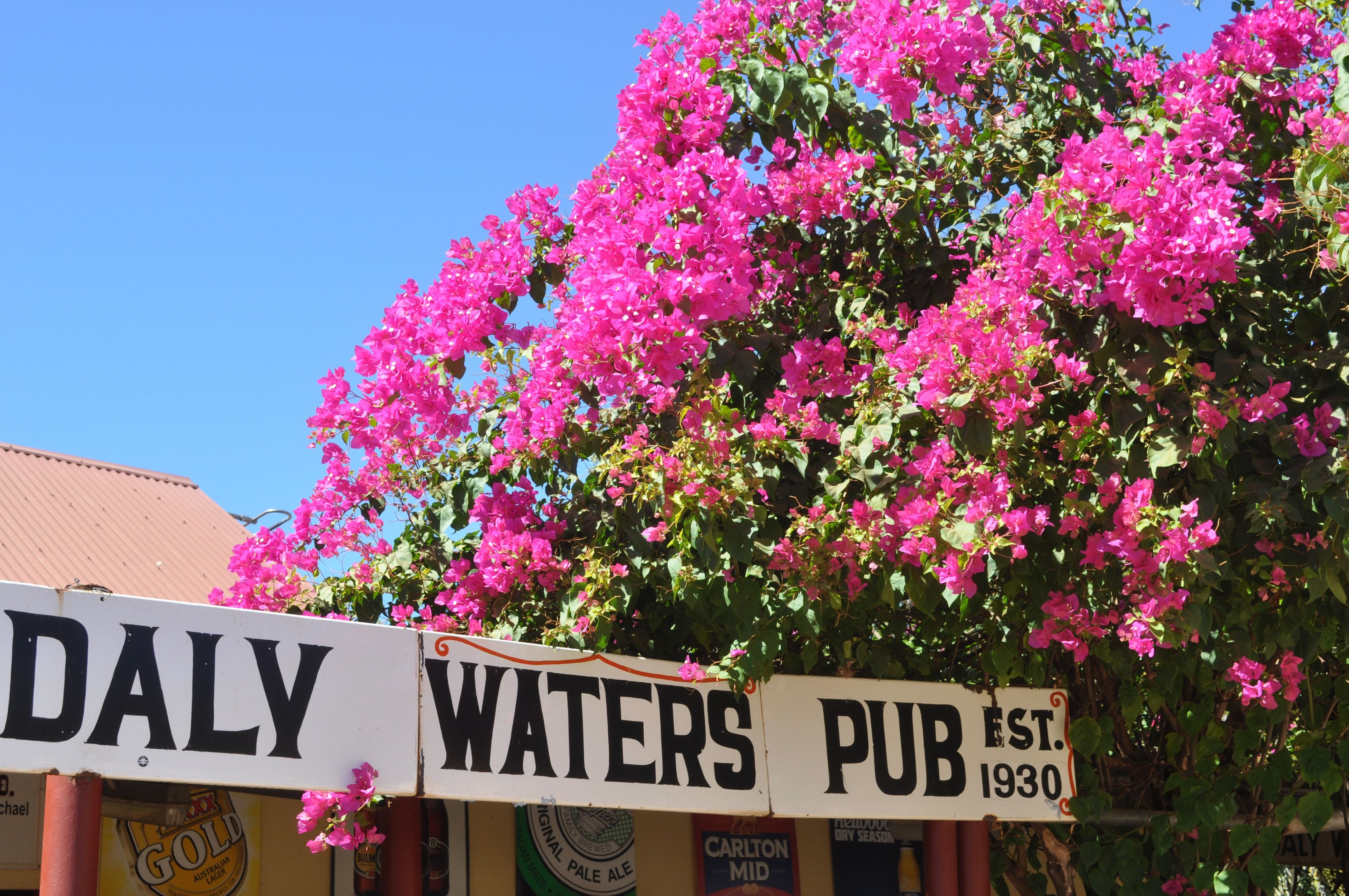 Daly Waters Historic Pub - Carnarvon Accommodation