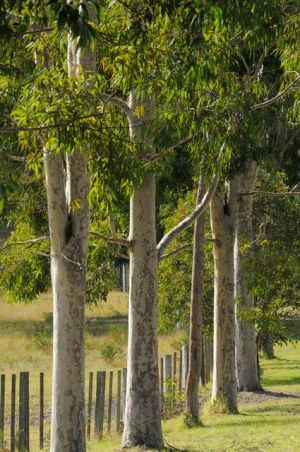Stringybark Cottages - Carnarvon Accommodation