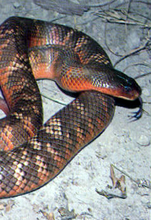 Armadale Reptile  Wildlife Centre - Carnarvon Accommodation