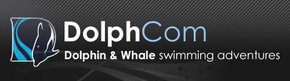 Dolphcom - Dolphin  Whale Swimming Adventures - Carnarvon Accommodation