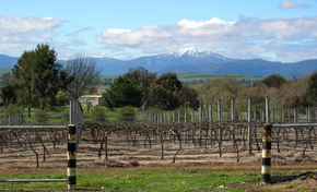 Buller View Wines - Carnarvon Accommodation
