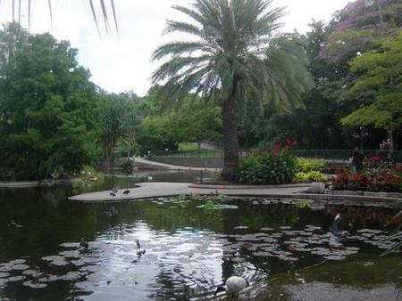 Brisbane City Botanic Gardens - Carnarvon Accommodation