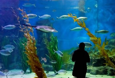 Melbourne Aquarium - Carnarvon Accommodation