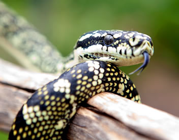 Reptile Encounters - Carnarvon Accommodation