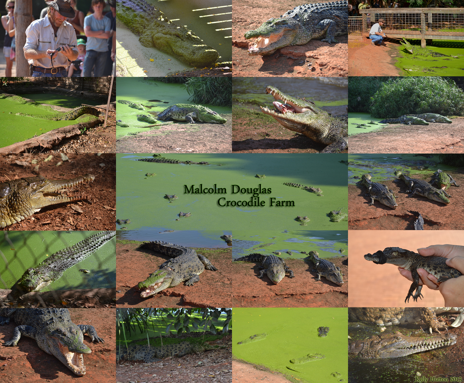 The Malcolm Douglas Crocodile Park