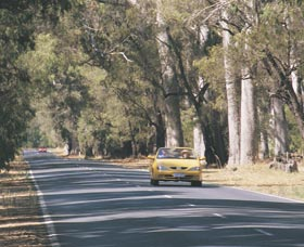 Ludlow Tuart Forest - Carnarvon Accommodation
