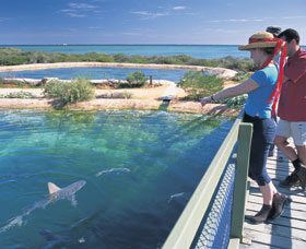 Shark Bay Marine Park - Carnarvon Accommodation