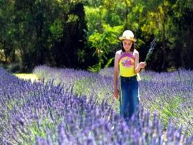 Brayfield Park Lavender Farm - Carnarvon Accommodation