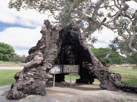 The Herbig Family Tree - Carnarvon Accommodation