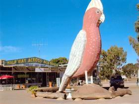 The Big Galah - Carnarvon Accommodation