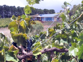 Zimmermann Wine - Carnarvon Accommodation