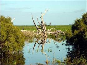 Bool Lagoon Game Reserve and Hacks Lagoon Conservation Park - Carnarvon Accommodation