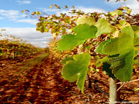 Mirabella Vineyards - Carnarvon Accommodation