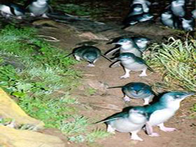 Penneshaw Penguin Centre - Carnarvon Accommodation