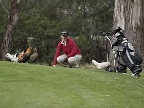 Tasmania Golf Club - The - Carnarvon Accommodation