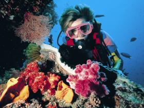 Nine Mile Reef Dive Site - Carnarvon Accommodation