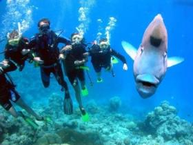 Gotham City Dive Site - Carnarvon Accommodation