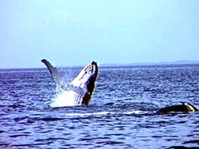 Whale Watching - Carnarvon Accommodation