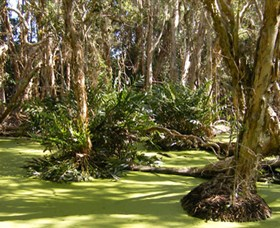Arkarra Lagoons and Tea Gardens - Carnarvon Accommodation