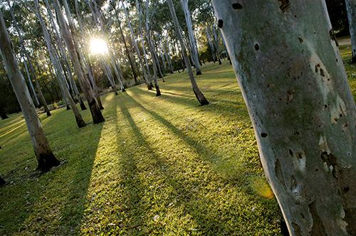 Tondoon Botanic Gardens - Carnarvon Accommodation