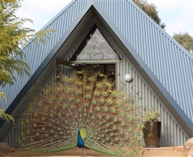 Halls Gap Zoo - Carnarvon Accommodation