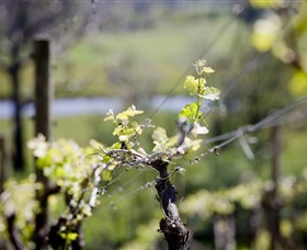 Norton Estate Wines - Carnarvon Accommodation