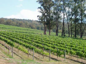 Piedmont Vineyard - Carnarvon Accommodation