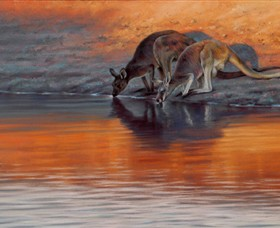 Steve Morvell Wildlife Art - Carnarvon Accommodation
