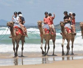 Camel Rides with Coffs Coast Camels - Carnarvon Accommodation