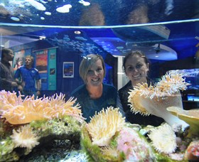 Solitary Islands Aquarium - Carnarvon Accommodation
