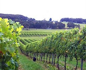 Banjo's Run Winery and Vineyard - Carnarvon Accommodation