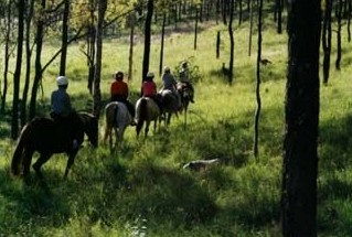 Hunter Valley Horse Riding and Adventures - Carnarvon Accommodation