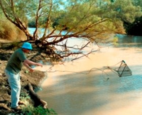 Charleville - Ward River Fishing Spot - Carnarvon Accommodation