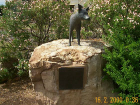 Dingo Statue - Carnarvon Accommodation