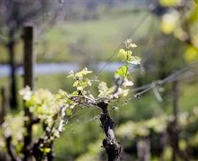 Mountainside Wines - Carnarvon Accommodation
