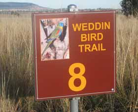Weddin Bird Trails - Carnarvon Accommodation