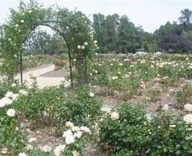 Victoria Park Rose Garden - Carnarvon Accommodation