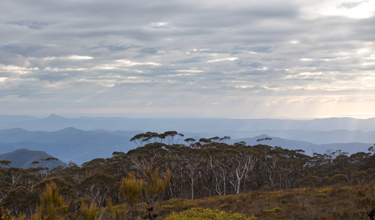 Mount Budawang trail - Carnarvon Accommodation