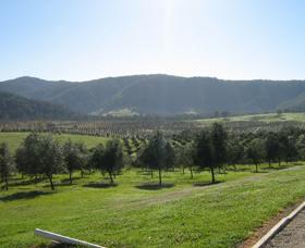 Hastings Valley Olives - Carnarvon Accommodation