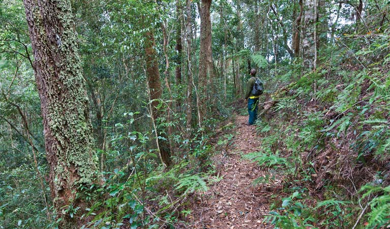 Blackbutt walking track - Carnarvon Accommodation