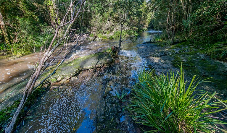 Dawson River walking track - Carnarvon Accommodation