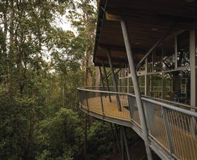 Tarkine Forest Adventures - Dismal Swamp - Carnarvon Accommodation