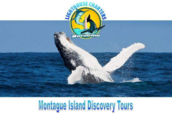 Lighthouse Charters Narooma - Carnarvon Accommodation