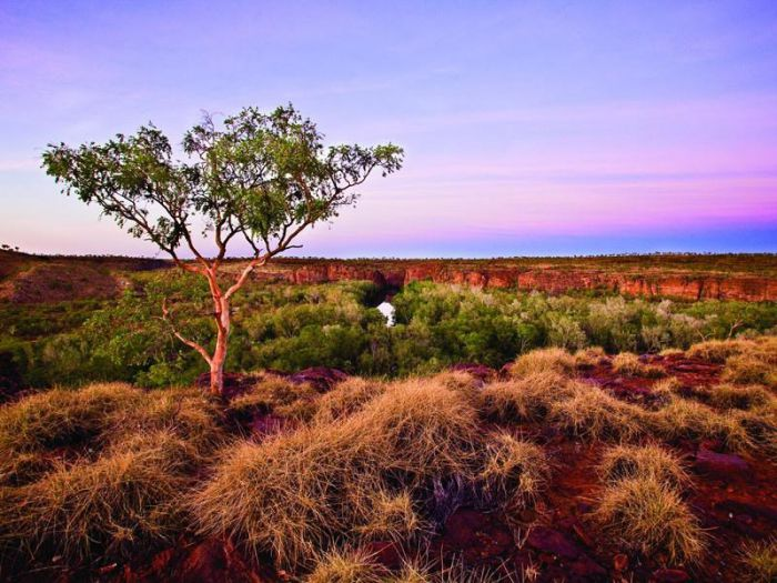 Island Stack Boodjamulla Lawn Hill National Park - Carnarvon Accommodation