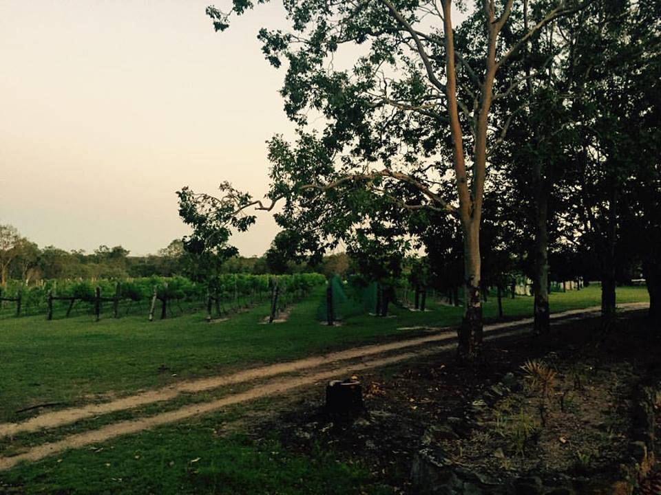 Brierley Wines - Carnarvon Accommodation