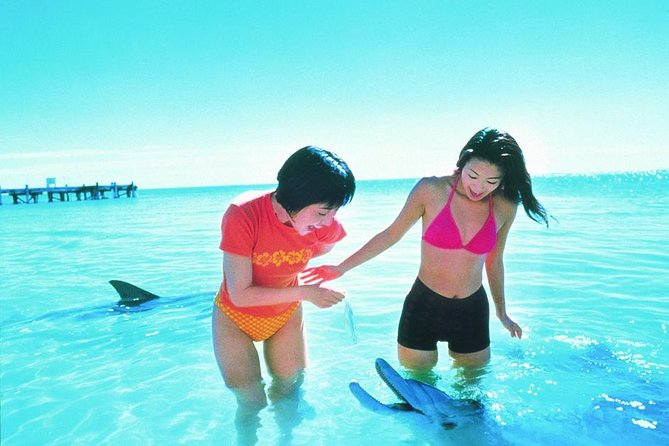 Monkey Mia Dolphins  Shark Bay Air Tour From Perth - Carnarvon Accommodation